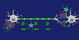 GLIAL CELLS-NEURON CROSSTALK IN CNS HEALTH AND DISEASE